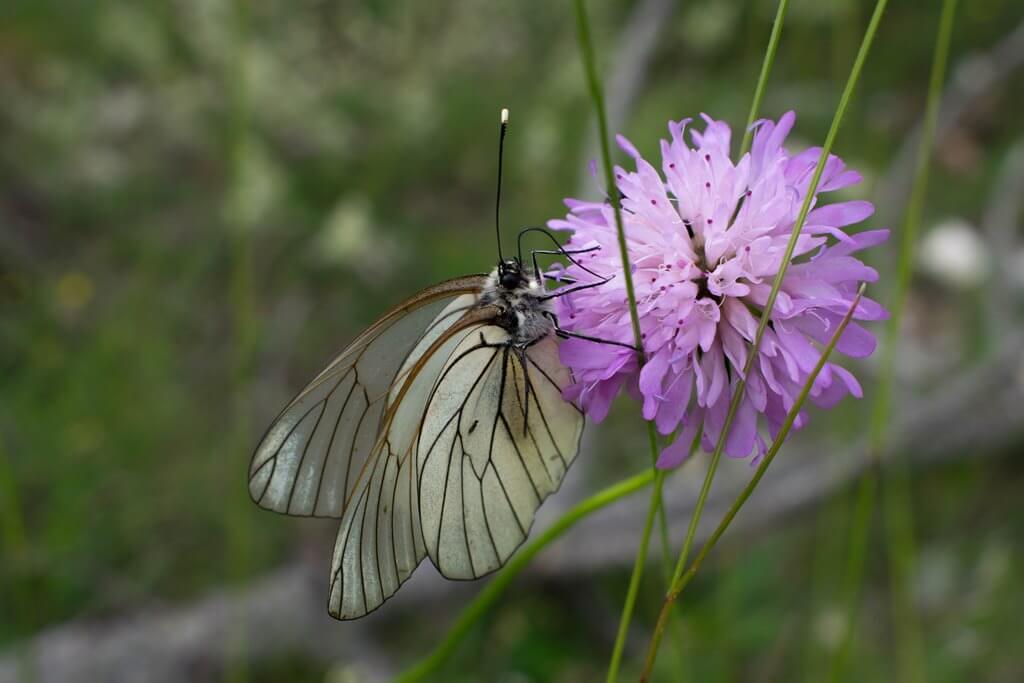 beautiflies on verdon gorge